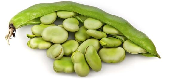 أطعمة مفيدة لصحة القلب Fava_beans_pile_570
