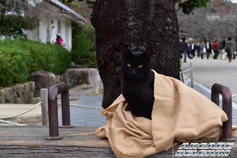 Voyage Japon 2015 Japon15_348