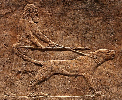 Chien de combat  Dogue-assyrien