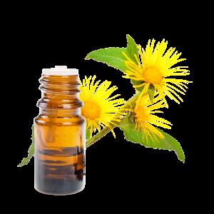 L'inule odorante, une huile essentielle magique contre les infections respiratoires HE-inule-odorante-300x300