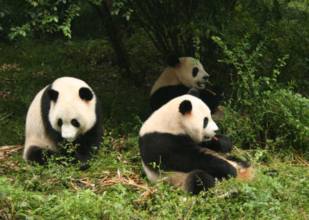 pandaworld