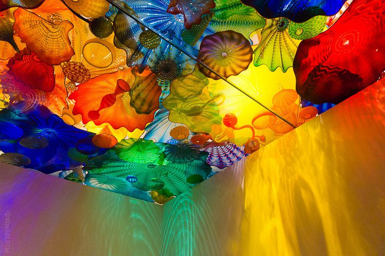 Dale Chihuly DSC05261