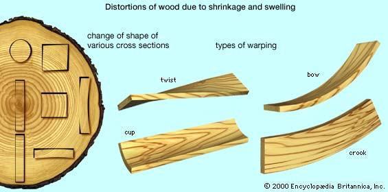 Comment choisissez vous votre bois  Ed_wd_britannicawarp
