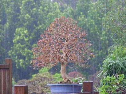 Kisa Spring__colour__in__Raining__day