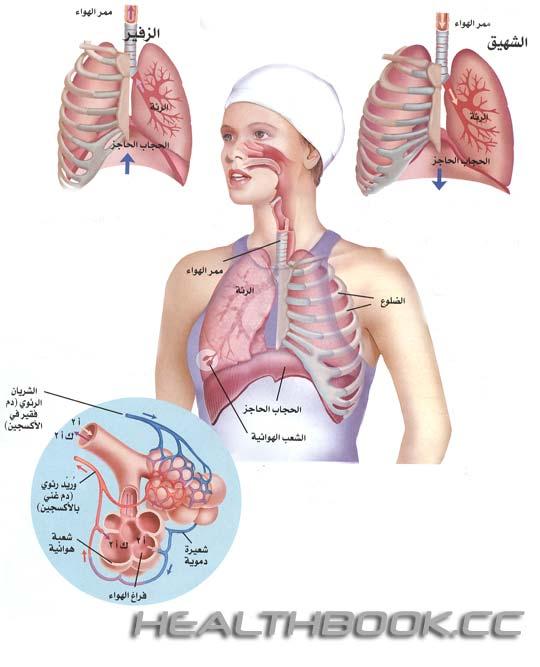 موسوعة هل تعلم الطبية Ashefaa-007