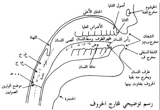 صورة توضيحية لمخــــارج الحــــروف 77aae19a7b