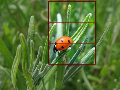 سبع نصائح للحصول على صور أفضل  219_11254759122