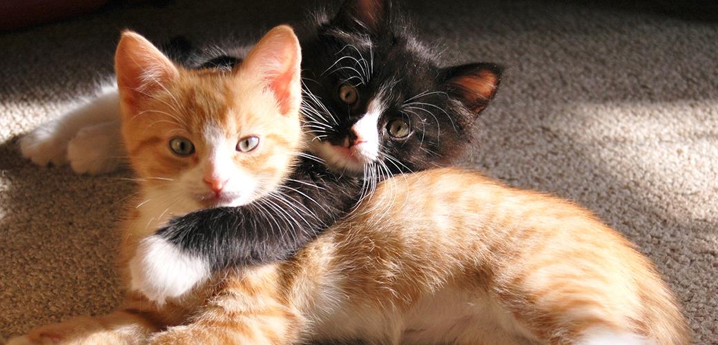 Najbolji prijatelj - Page 3 Cat-care_urine-marking_main-image