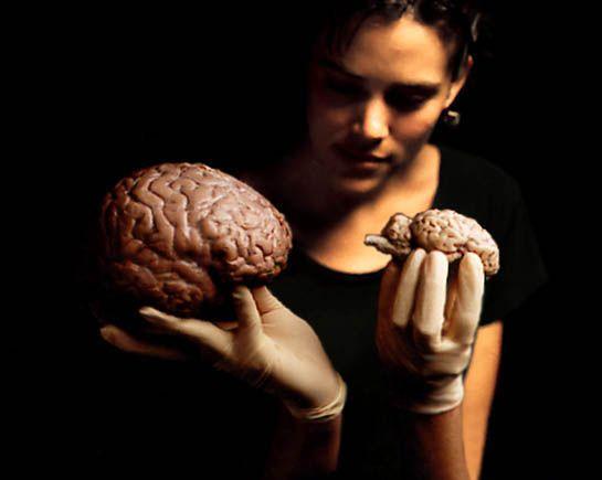 MILLES ET UNE NUITS A CASSIS ... Cerveau-taille