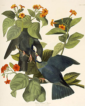 Vos livres du moment - Page 8 222_white-crowned-pigeon