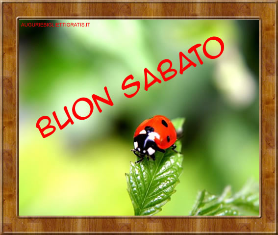 Sabato 03 Giugno Sabato_coccinella