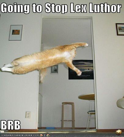 مواقف واطرائف القطط Funny-pictures-superman-orange-cat