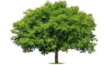 Autogen végétation Arbre