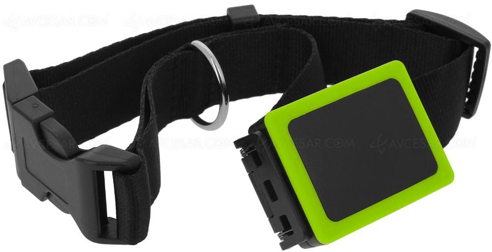 Quel GPS pour mon chien choisir Weenect-pets-collier-gps-pour-chien_054501