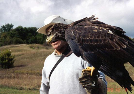 Comparação do tamanho de águias  com relação ao homem. Will10