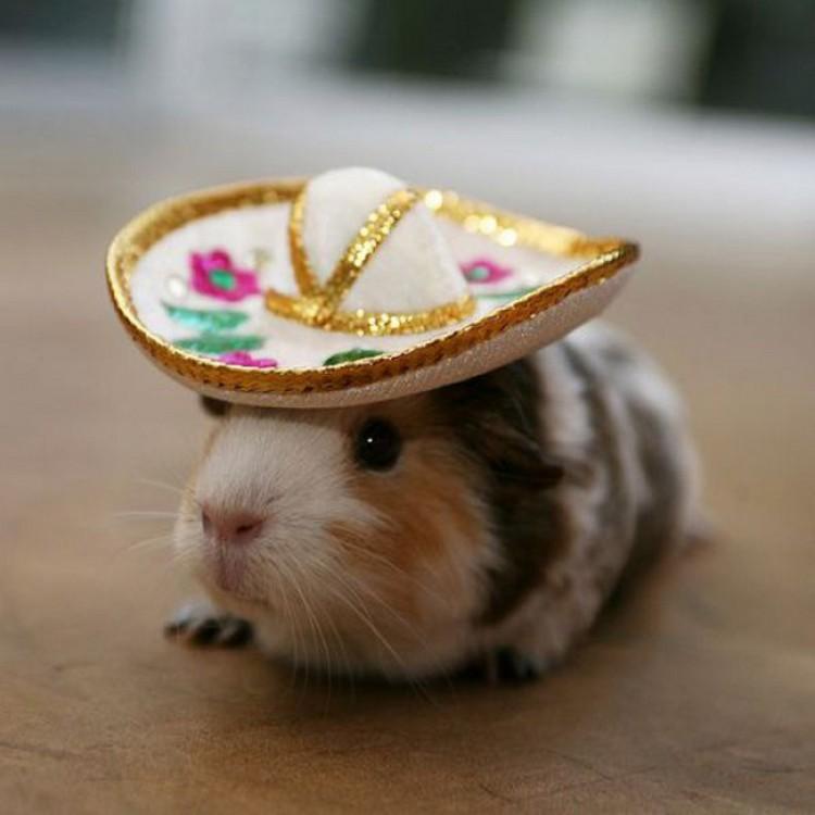 ITT: Cuteness!!!!  Awesomelycute-animals-wearing-hats-10