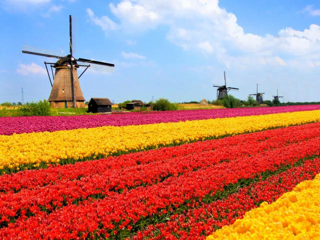 Holandija 10149224455747a8d12af24589315154_v4%20big