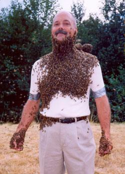 Bees Gibeaubees