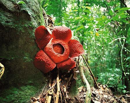 أكبر زهرة... في العالم 18058_01205689826