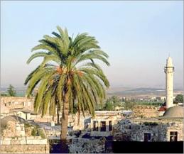 بعض المدن الفلسطينية  443_01261584229