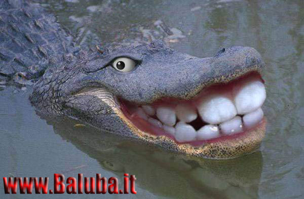 Carnevale *ogni scherzo vale* Animal_animali_pazzi49