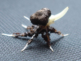 l'image énigme par  blucat (15juillet) trouvée par sylvie - Page 2 Bananier-germination-1