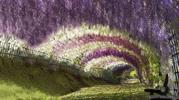 Mesta na Zemlji sa vanzemaljskim izgledom Tunel-glicinija