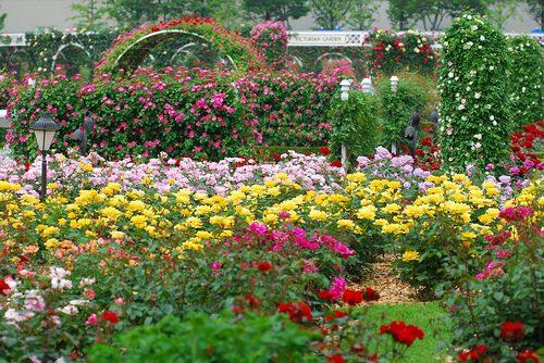 Najlepse baste dvorista i parkovi Park-ru%C5%BEa-u-Everlandu
