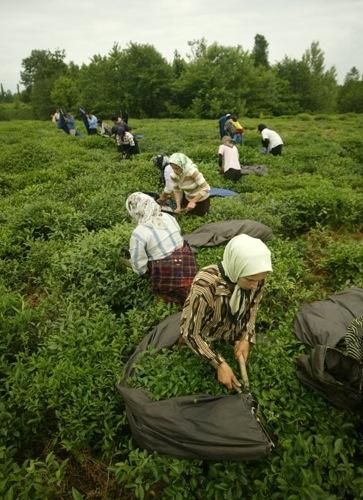 Des maisons de semences paysannes pour se libérer de l'agrobusiness Arton2695-76b71