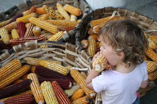 Des maisons de semences paysannes pour se libérer de l'agrobusiness Arton2750-d787b