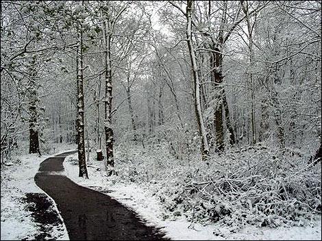 Snežne čarolije Snow_norsey_woods_470_470x352