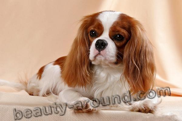 Все самые красивые собаки Мира 6