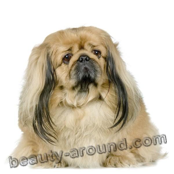 Все самые красивые собаки Мира 7