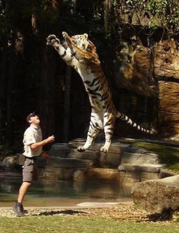 Εδώ καλησπέρες ......καληνύχτες ......!!!! - Σελίδα 5 Tigerarr