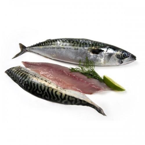 42 tipos de carnes de filete de pescados clase gourmet en imágenes Mackerel_fillet
