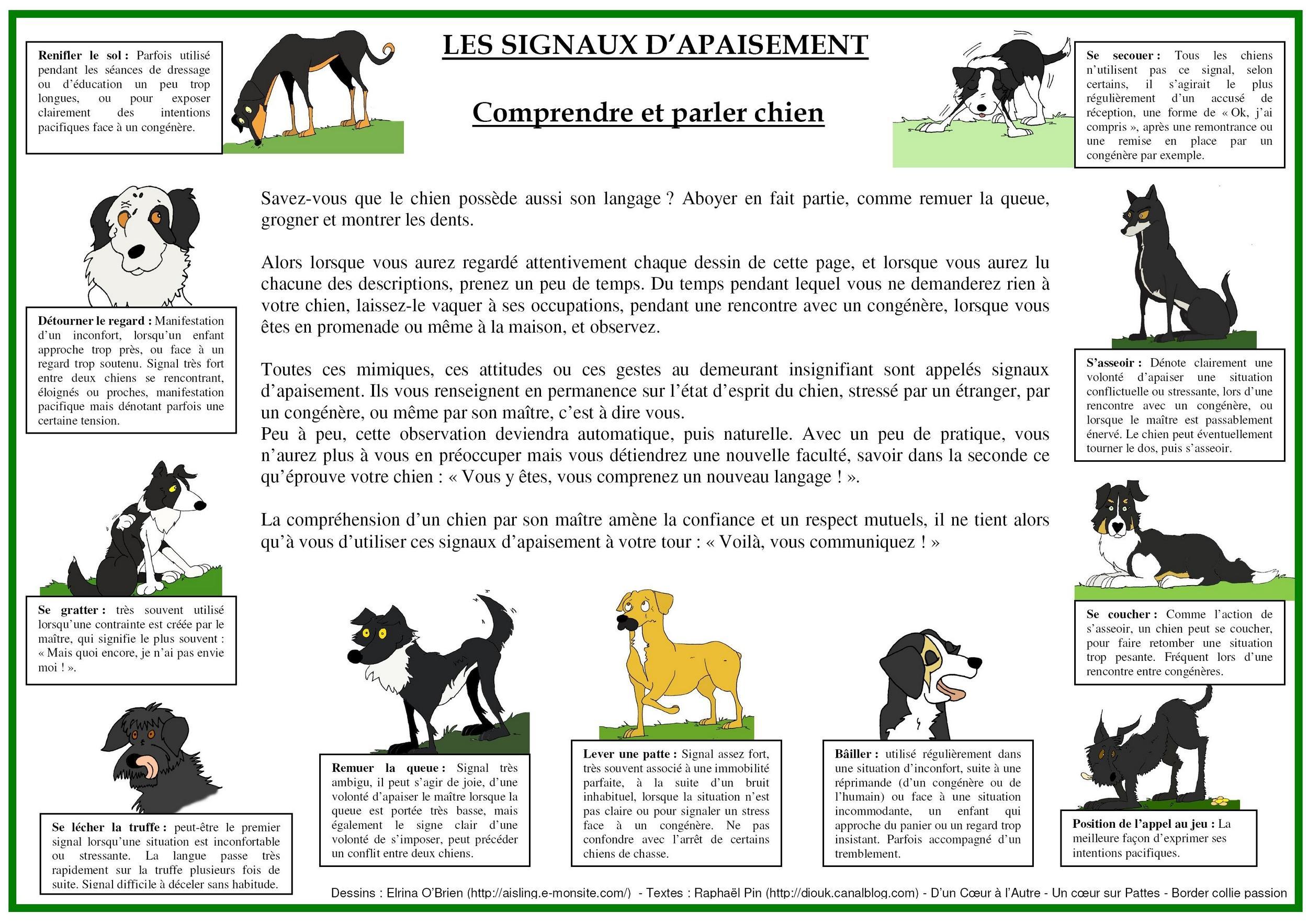 collier - présentation de JUSS, chien traumatisé  54156373739989