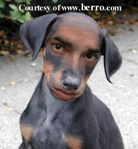 Fotografi për të qeshur... - Faqe 2 Funny_dog_man_doctored_picture