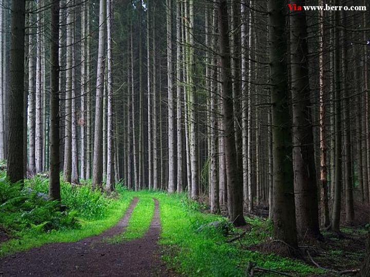 عکس -آرامش بخش از طبیعت Forest_road_picture_mystery