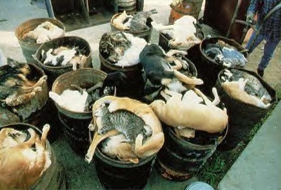 massacre de Galgos et pondecos - Page 3 Deadcatsdogs
