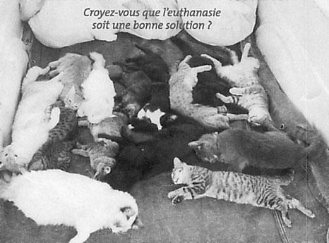 massacre de Galgos et pondecos - Page 3 Euthanasie