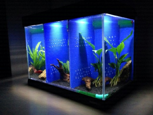 Bricolage: un bel aquarium cloisonné 27