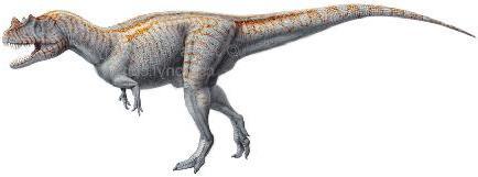 Ceratosaurus 6nd9-1a