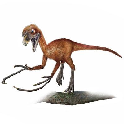 Epidendrosaurus 6nd9-2b