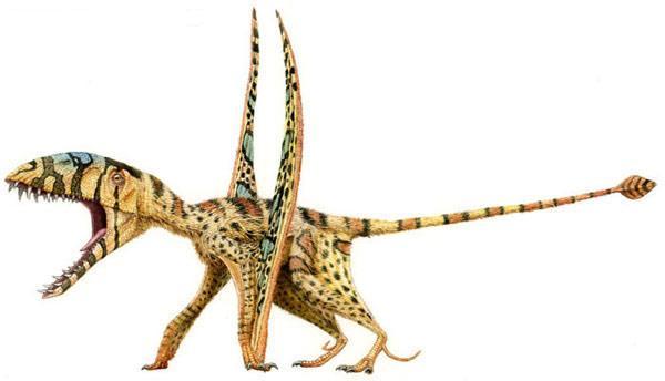 Dimorphodon 6nd9-6m
