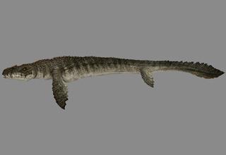 Mosasaurus 6nd9-7