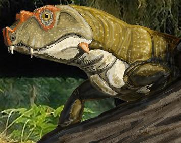 Tetraceratops 6nd9-8s