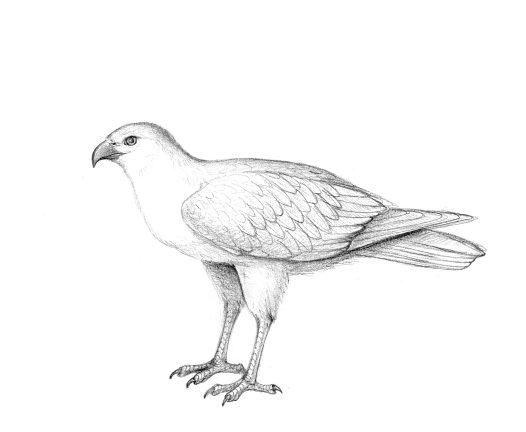 Flexiraptor 6nd9-aq