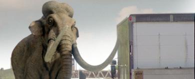 Kolumbianisches Mammut 6nd9-q
