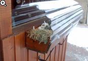 Winterharte im Balkonkasten - Seite 3 9isk-3g