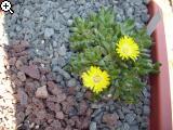 Blütenbilder 2010 - Seite 2 E8vk-1g